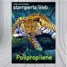 Poster in Polipropilene